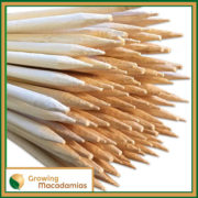 Bamboo-Macadamia-stake-40cm-2