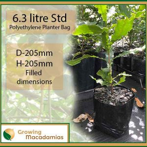6.3 litre Standard Macadamia Planter Bags (Heavy Duty) - for more info, go to growingmacadamias.com.au