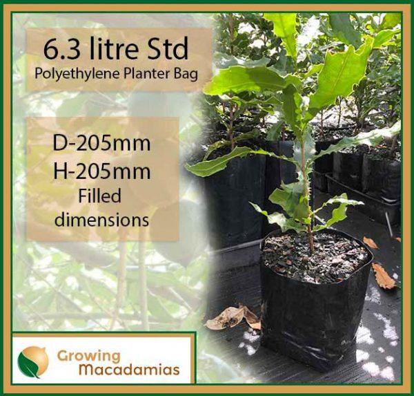 6.3 litre Standard Macadamia Planter Bags (Heavy Duty) - for more info, go to growingmacadamias.com.au